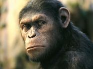 RiffTrax- Andy Serkis in Rise of the Planet of the Apes