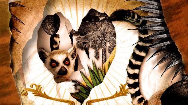 File:Lemur street 3.jpg