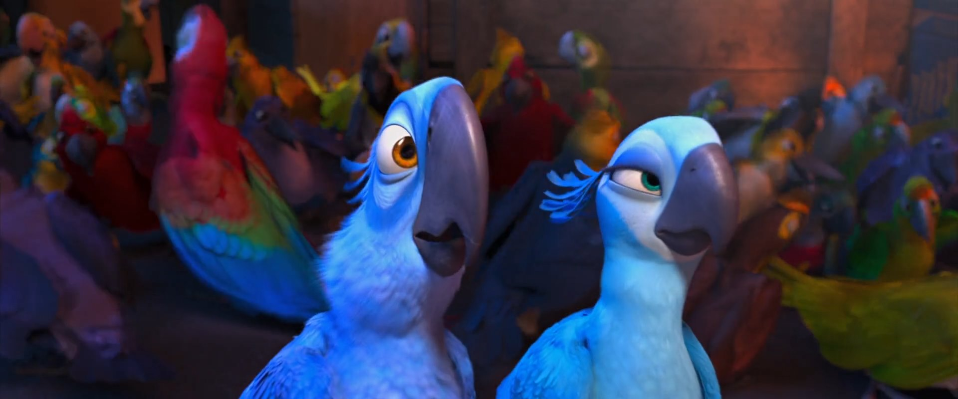 image - blue-parrots-rio-the-movie | rio wiki | fandom powered