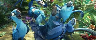 Jewel-blu-eduardo-grandpa-tiago-bia-carla-in-RIO-2