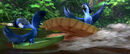 Discover the Forest with Rio 2.mp4 000019719