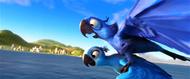 Blu takes flight