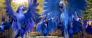 Rio 2 Forest 2