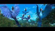 Spix macaw family