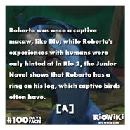 Rio-Wiki-100Days100Facts-052