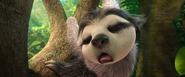 Sleeping rapping sloth