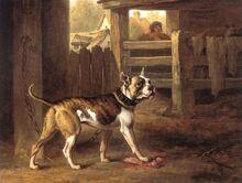 Philip Reinagle - Bulldog