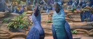 Blu e Edu