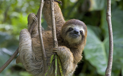 image sloth hanging on branch jpeg rio wiki fandom powered by