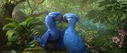 Blu y Perla en el amazonas