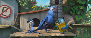 Amazon or Bust Blu, Bia and Tiago