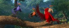 Scarlet Ibis 1