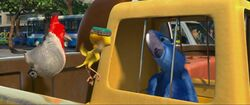 Голубчик знакомится с Нико и Педро