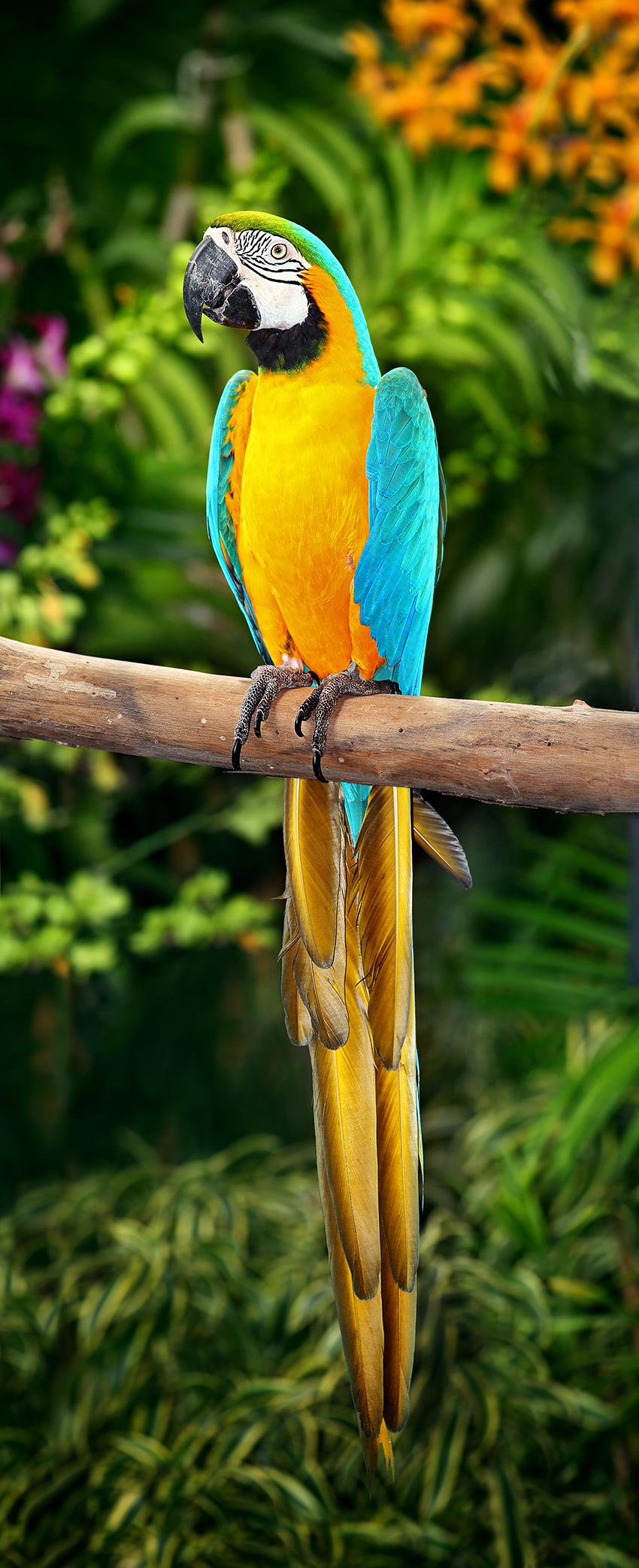 blue and gold macaw rio wiki fandom powered by wikia