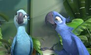Rio-Review-The-Film-Pilgrim-Jewel-and-Blu1
