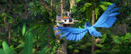 Rio 2 Forest