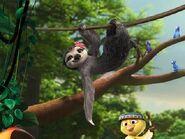 The female sloth