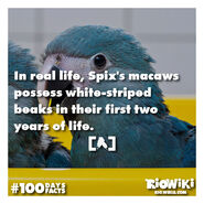 Rio-Wiki-100Days100Facts-029