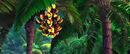 Rio (movie) wallpaper - Black Mandibled Toucans