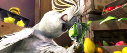 Rio (movie) wallpaper - Nigel Intimidating Scardy Bird