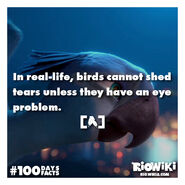 Rio-Wiki-100Days100Facts-091