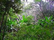 Tijuca Forest 1001