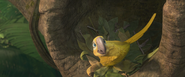 Sad macaw