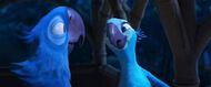 Jewel and Blu