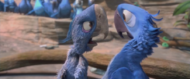 Ancient Spix's Macaw