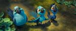Chicks in the jungle