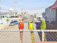 Three Birds on a Boardwalk