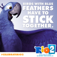 Birds of blue feathers