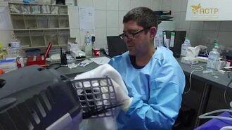 ACTP – Spix's Macaws medical check-up spixsAreComingHome-0