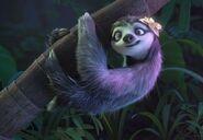 The female sloth 2