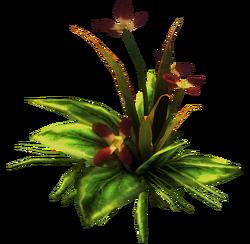 Roślina lecznicza r1