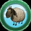 Achievement Sheep