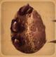 Mudgut Egg ID