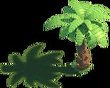 Coconut Tree 2