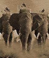 0402 - Elephant Brigade