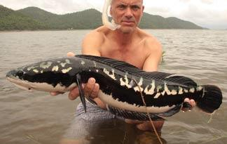 snakehead river monsters wiki fandom powered by wikia