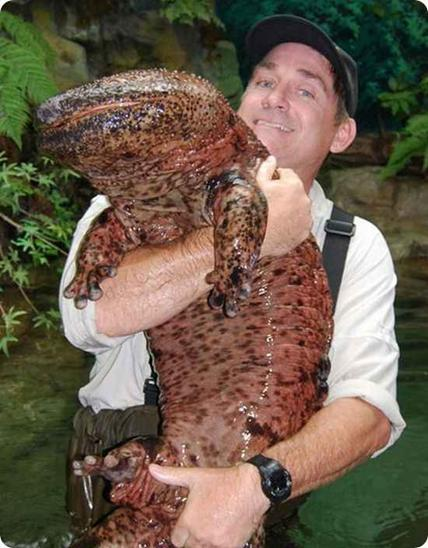 giant japanese salamander river monsters wiki fandom powered by