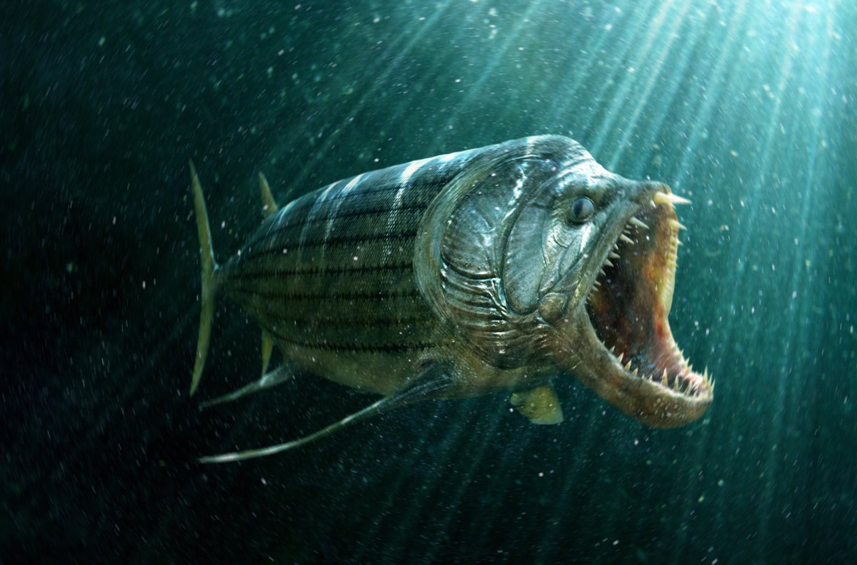 Xiphactinus | River Monsters Wiki | Fandom