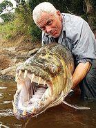 Tigerfish 2