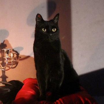 Salem (mainpage)