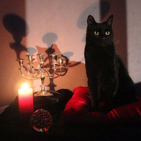 Salem sera bien présent