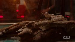 RD-Caps-2x05-When-a-Stranger-Calls-47-Snake