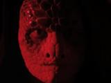 Snake Ghost