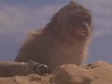 Max's monkey