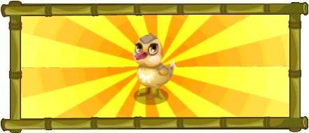 Mandarin Duck-Header