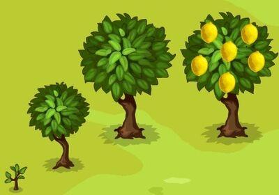 Lemon-Growth